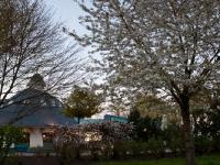 "Restaurant ""Zur Seebrücke"" Boltenhagen - Pavillon im Frühjahr"